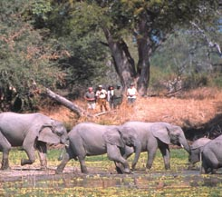 South Luangwa & Victoria Falls with Norman Carr Safaris - Semi Customized
